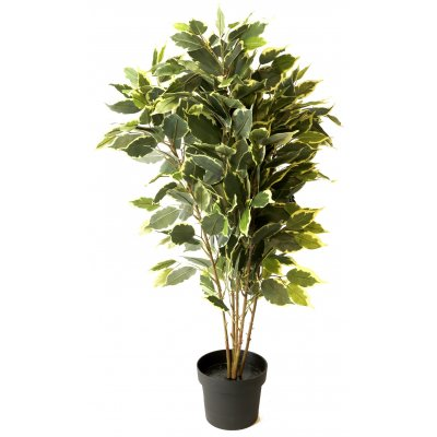 Konstväxt - Ficus H80 cm