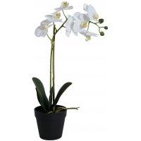 Konstväxt - Orkidé 1 stänglad H48 cm - Vit