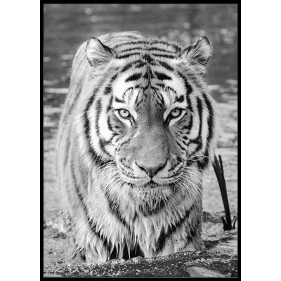 TIGER POSTER - Poster 50x70 cm