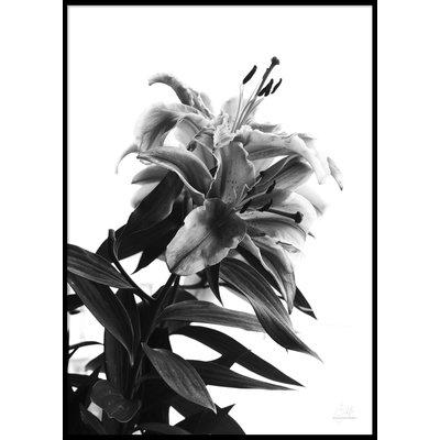 BLACK AND WHITE FLOWER - Poster 50x70 cm