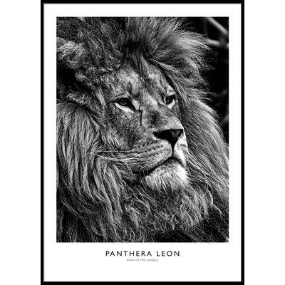LION PORTRAIT B&W POSTER - Poster 50x70 cm