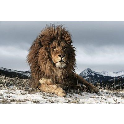 Glastavla Lion - 120x80 cm