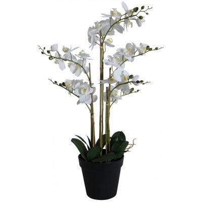 Konstväxt - Orkidé 8 stänglad H80 cm - Vit