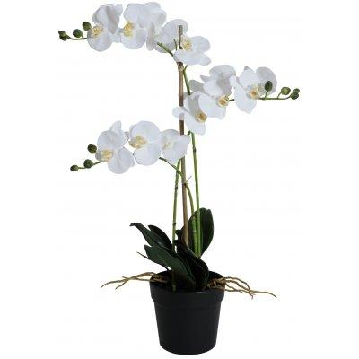Konstväxt - Orkidé 3 stänglad H64 cm - Vit
