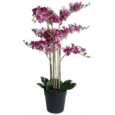 Konstväxt - Orkidé 9 stänglad H90 cm - Mörkrosa