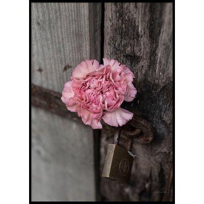 PINK FLOWER CLOSE UP - Poster 50x70 cm
