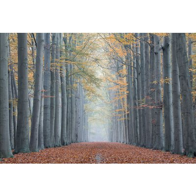 Glastavla Trees nr 2 - 120x80 cm