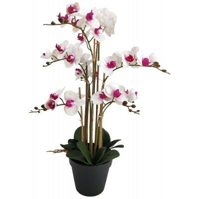 Konstväxt - Orkidé 8 stänglad H80 cm - Vit/Rosa
