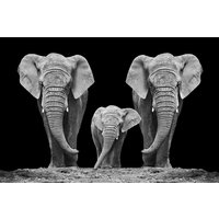 Glastavla Elephant family - 120x80 cm